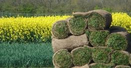 BGL. – Rollrasen gibt es für jede Lage und Gartensituation, sei es Schattenrasen, Halbschattenrasen oder Sportrasen.