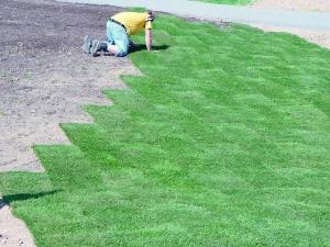 Um schnell und zuverlässig zu einem gepflegten Rasen zu kommen, ist es ratsam, sich professionell vom Landschaftsgärtner Rollrasen verlegen zu lassen.